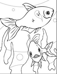 ryby2