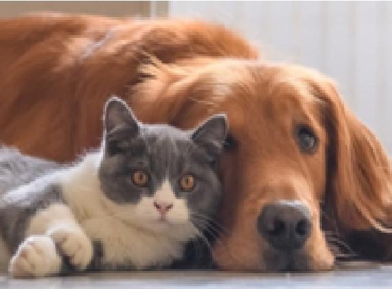 """Konkurs fotograficzny """"Zwierzęta – lubię, szanuję, dbam"""""""